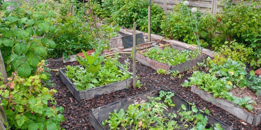 Comment faire un jardin biologique: techniques de culture