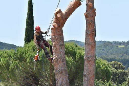 Réussir l'élagage d'un arbre : nos astuces et conseils